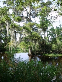 Jean Lafitte National Historic Park Bayou Coquille trail just outside New Orleans Louisiana Took it on my moms point-and-shoot heck yeah