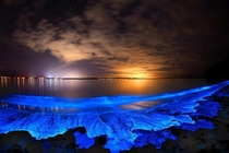 Jervis Bay illuminated by fascinating bioluminesce Australia