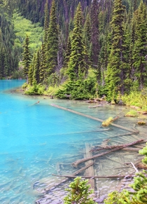 Joffre Lakes British Columbia - slowly decomposing fallen trees  OC