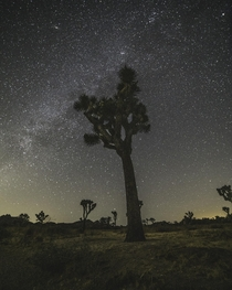 Joshua National Park at Night CaliforniaUSA  ankit_biradar