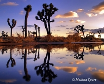 Joshua Tree National Park After Heavy Rains
