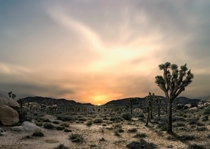 Joshua Tree National Park CA