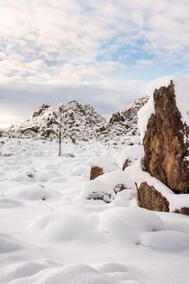 Joshua Tree National Park CA covered in over a foot of snow