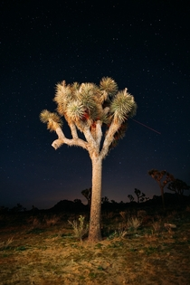Joshua Tree National Park CA  x