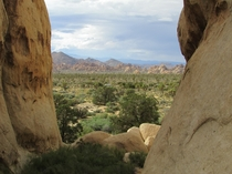 Joshua Tree National Park looking out from Jumbo Rocks