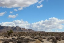 Joshua Tree National Park near Cottonwood Spring