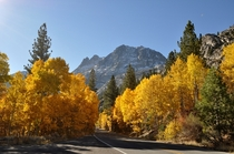 June Lake Loop California - Fall Colors