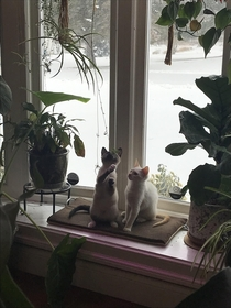 Jungle kitties