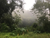 Jungle of Guinea Equatorial in west africa