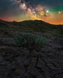 Juniper tree and milky way in Grasslands National Park Saskatchewan