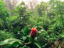 Just a casual stroll through the incredible Monteverde Cloud Forest Costa Rica
