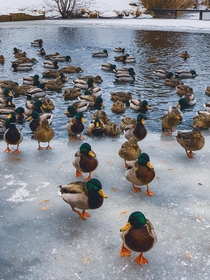 Just a few cool ducks