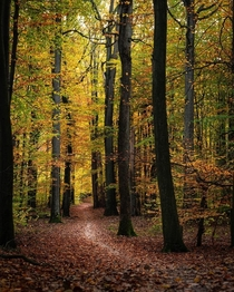 Just a soothing autumn photo from yesterdays walk Poland