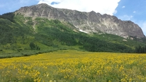 Just another meadow in Crested Butte Colorado