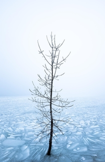 Just happened to find a random tree in the ice at Utah Lake - Orem Utah  northalpinephoto