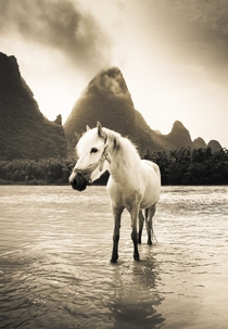 Just saw this beautiful horse in the south of China on the Li River
