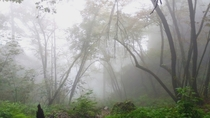 Just took this with my phone Fog in the woods Monterrey Mxico