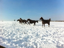 Kept Niger Xclusive and Hypnotism enjoying the snow