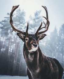 King of the Woods  had a staring contest with this proud fella the other day Instagram moners