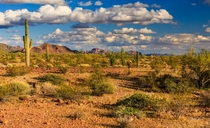King Valley Yuma County Arizona - on the south side of the Kofa Mountains February