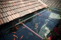 Koi pond roof