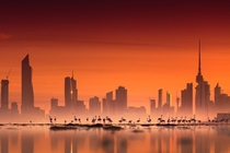 Kuwait Flamingos and Kuwait City at sunrise photographed by Mohammed ALSULTAN