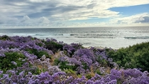 La Jolla Tide Pools-