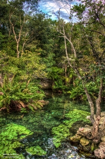 Lagoon In The Mayan Jungle