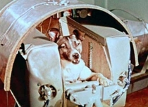 Laika the first dog in space has her capsule built around her No provisions were made for her return and she died in orbit November
