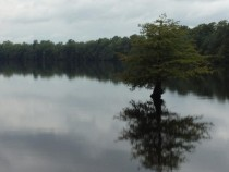 Lake Drummond in the Great Dismal Swamp National Wildlife Refuge Chesapeake VA