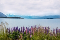 Lake Tekapo during the summer