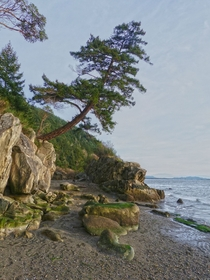 Larabee State Park Washington