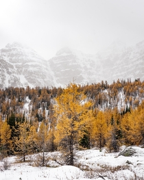 Larch Valley - Alberta Canada  IG _stephenflynn