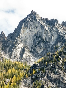 Larches at the Enchantments Alpine Lakes Wilderness WA