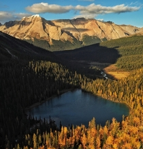 Larches showing off their golden fall colors Canadian Rockies - Banff National Park