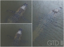 Large Gator in neighborhood lake Daphne AL