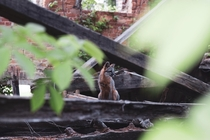 Last known inhabitant among the ruins of St Agnes Hospital Raleigh NC