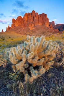 Last light hits the Superstition Mountains and this lonely Cholla cactus in Arizona Legend has it a Dutchman lost his gold here  x