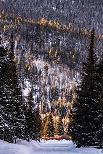 Last light illuminating the evergreens in Rocky Mountain National Park Colorado