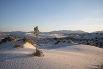 Last month White Sands National Monument became White Sands National Park Its the largest gypsum dune field in the world and its stunning you owe it to yourself to visit if you ever get the chance