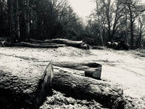 last winter on one of my timber sites in Perthshire Scotland