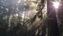 Late morning photo I took on our honeymoon in the Redwood National Forest