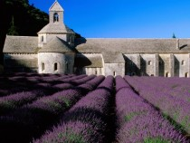 Lavender Field Abbey of Senanque Gordes Provence France