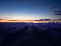 Lavender fields of Valensole France
