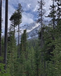 Layers of dense forest in Grand Teton National Park Wyoming  IGcoreyraff
