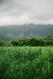 Layers of Green Oahu Hawaii