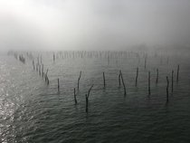 Le Cap Ferret France - Oyster Beds
