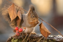 Leaf walking stick by Geert Weggen