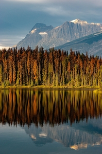 Leech Lake Jasper National Park Alberta Canada