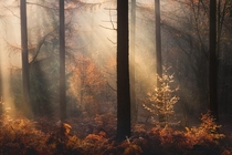 Let there be light Sunday blasting through the trees hitting the last autumn colours in The Netherlands x